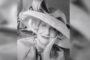 UMRLA ISIDORA BJELICA: Poznata književnica preminula u 52. godini